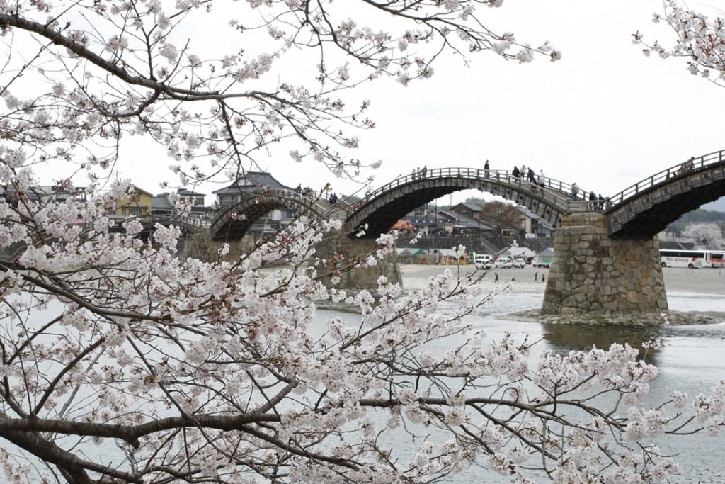 錦帯橋_桜