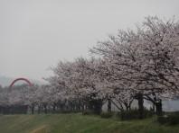 桜づつみ公園